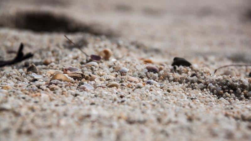 Vita skal med stenar/vaggar, sander, små stycken av trä arkivbild