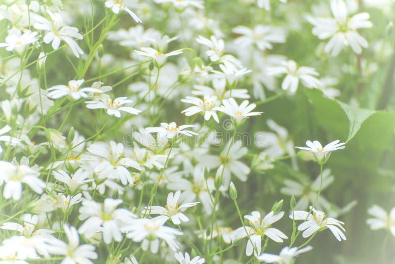 Vita små blommor för textur arkivfoton