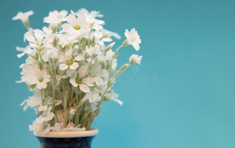 Vita små blommor i en vas En bukett av blommayaskolkien i en keramisk vascloseup Blommor i en blå vas med en modell på royaltyfri foto