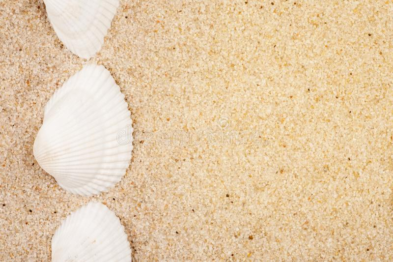 Vita snäckskal på en sand, skjuten makro arkivbild