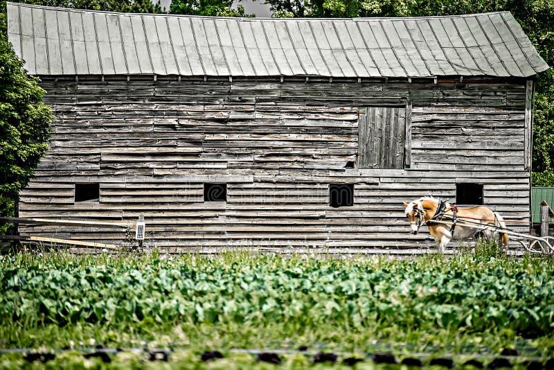 Vita sul campo dell'azienda agricola nel paese rurale immagine stock