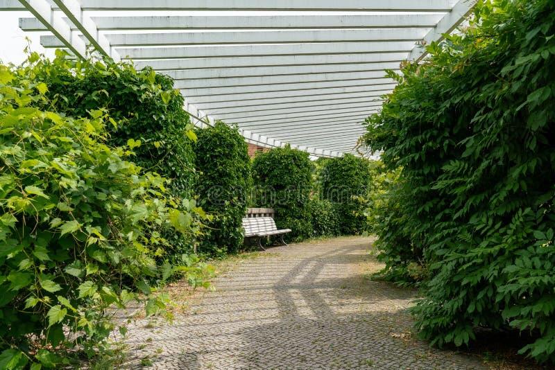 Vita trä parkerar bänken som är scenisk under en vit pergola arkivbilder