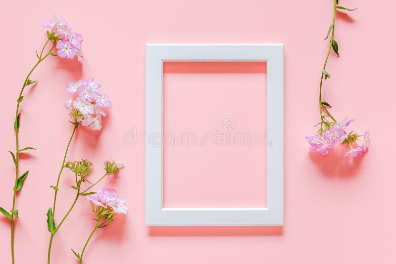 Vita träbildram och blommor på rosa bakgrund med kopieringsutrymme Den idérika lägenheten för den bästa sikten lägger falskt upp  royaltyfri foto