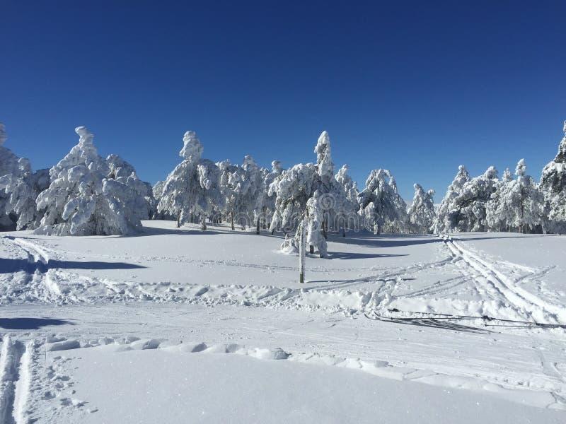 Vita träd, når att ha snöat arkivbild