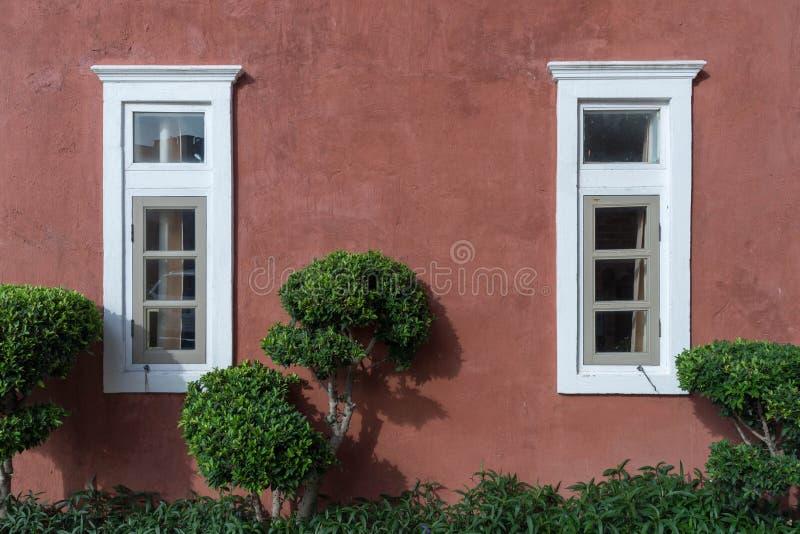 Vita träfönster och brun rosa rå betong med det gröna busketrädet royaltyfria foton
