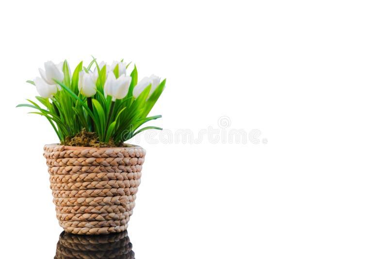 Vita tulpan i blomkruka arkivfoto