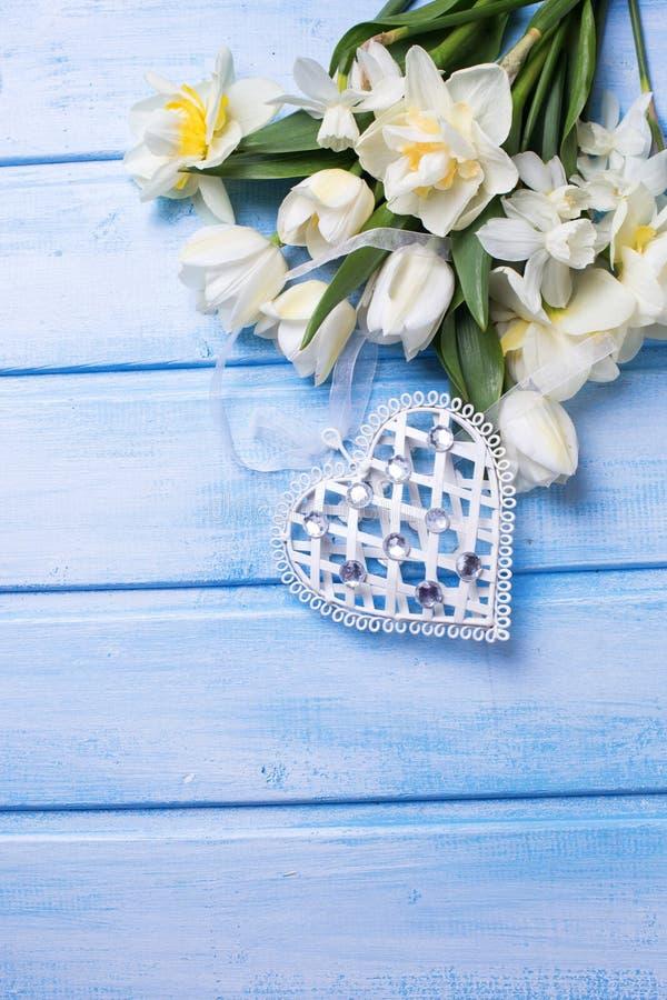 Vita tulpan och pingstliljablommor och dekorativ hjärta på blått arkivfoto