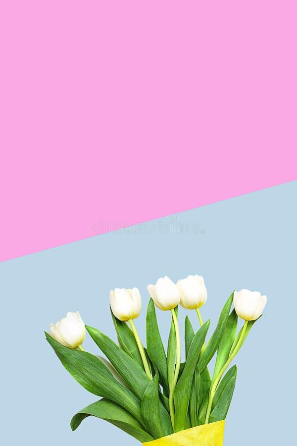 Vita tulpanblommor för vår på pastellfärgad blå och rosa bakgrund kort lyckliga easter Lekmanna- lägenhet, bästa sikt kopiera avs arkivfoton
