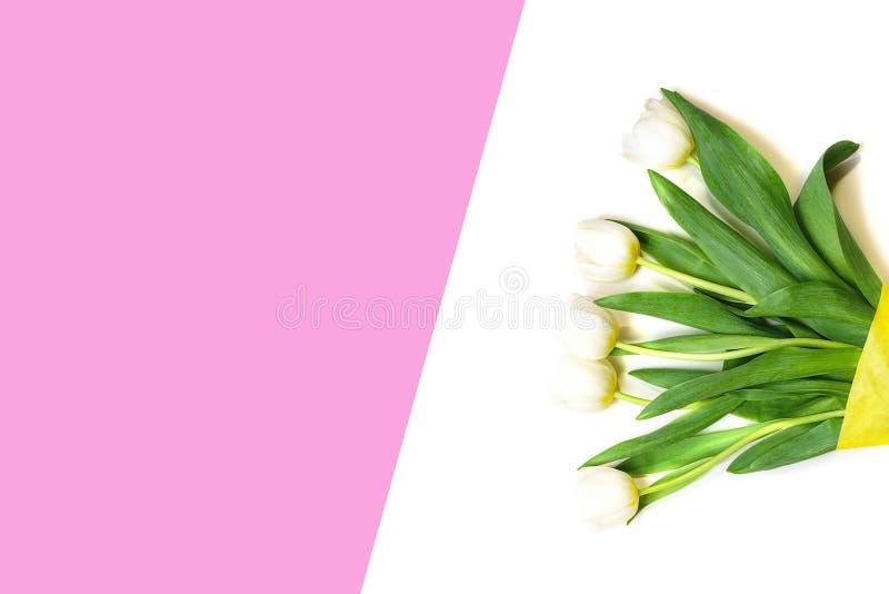 Vita tulpanblommor för vår på vit och rosa bakgrund kort lyckliga easter Lekmanna- lägenhet, bästa sikt kopiera avstånd Begrepp a royaltyfri fotografi