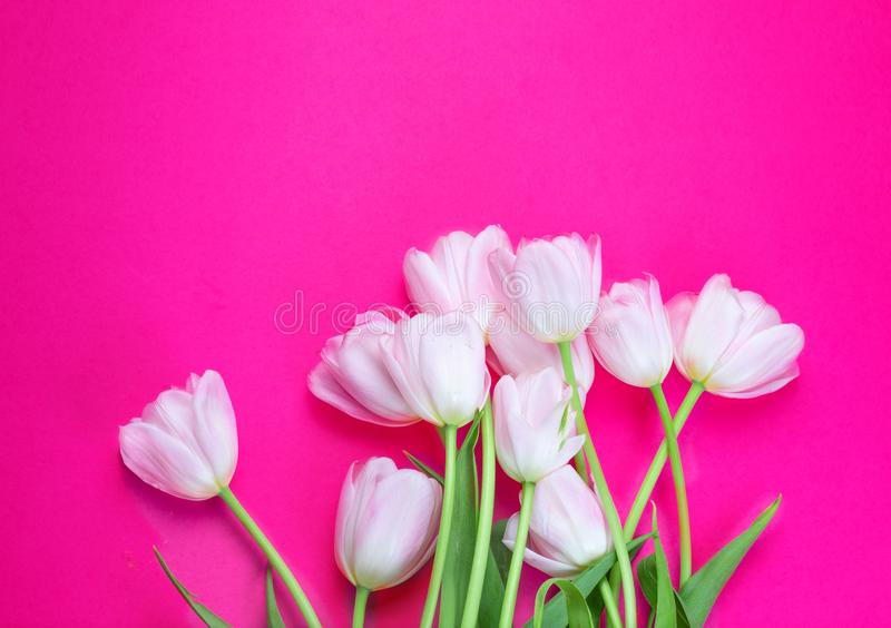 Vita tulpanblommor på rosa bakgrund med kopieringsutrymme för din text målat gräs för 2 placerade allt för easter för hinkfågelun arkivfoto