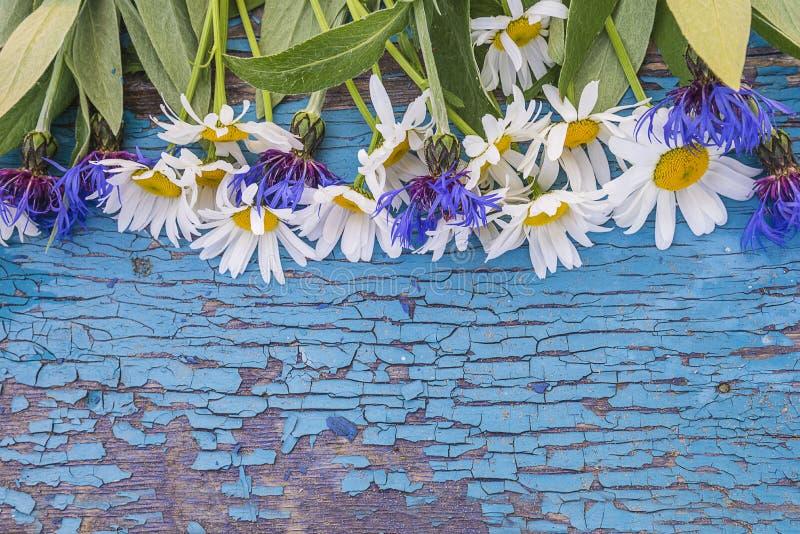 Vita tusenskönor och blå blåklintram arkivbild