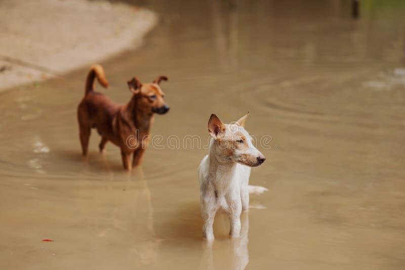 Vita två och brun hund s royaltyfria bilder