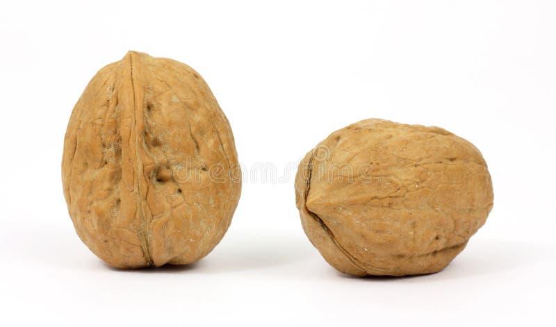 vita valnötter för bakgrund två royaltyfri foto