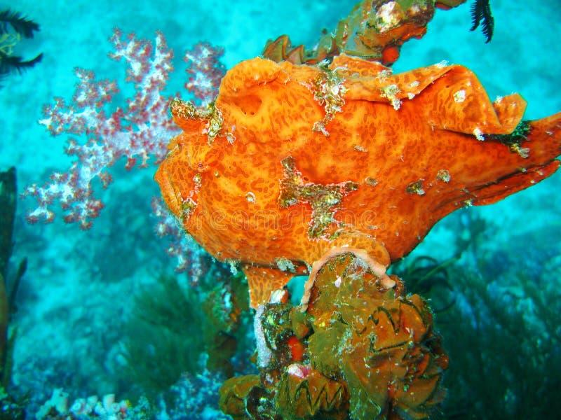 Vita variopinta in barriera corallina fotografia stock