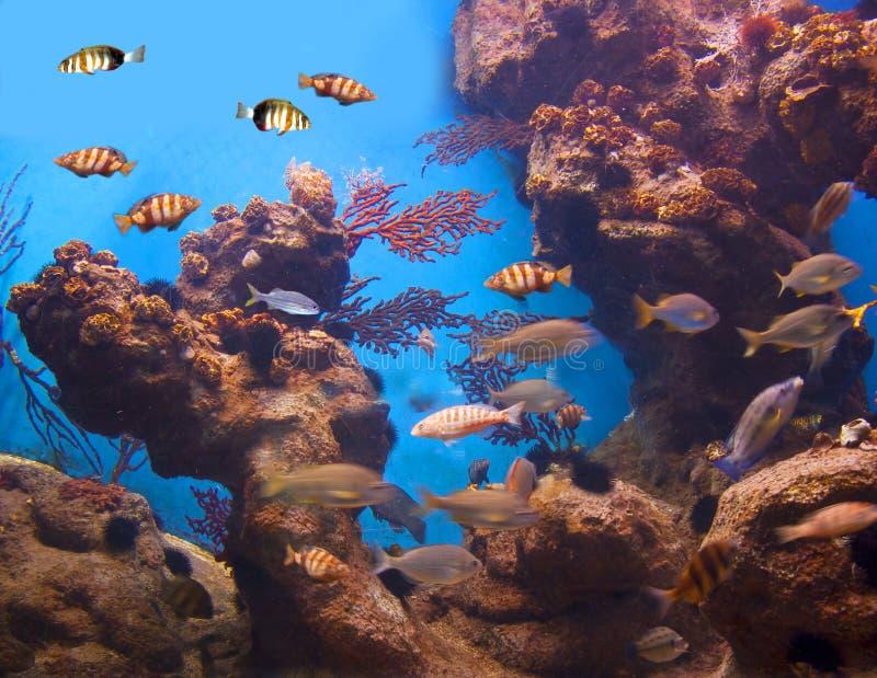 Vita variopinta e vibrante dell'acquario fotografia stock