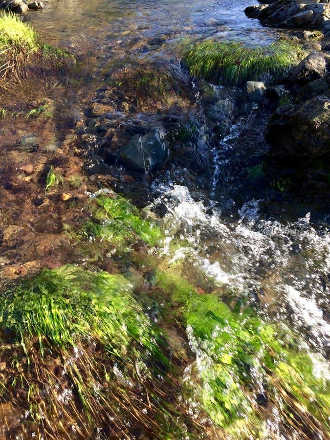 Vita verde sotto chiara acqua fotografia stock