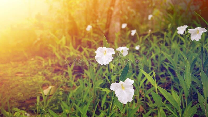 Vita vildblommor naturligt arkivbild