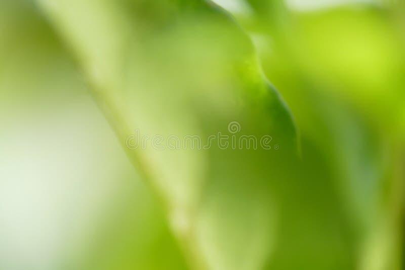 Download Vital green stock illustration. Image of serene, graphic - 12808892