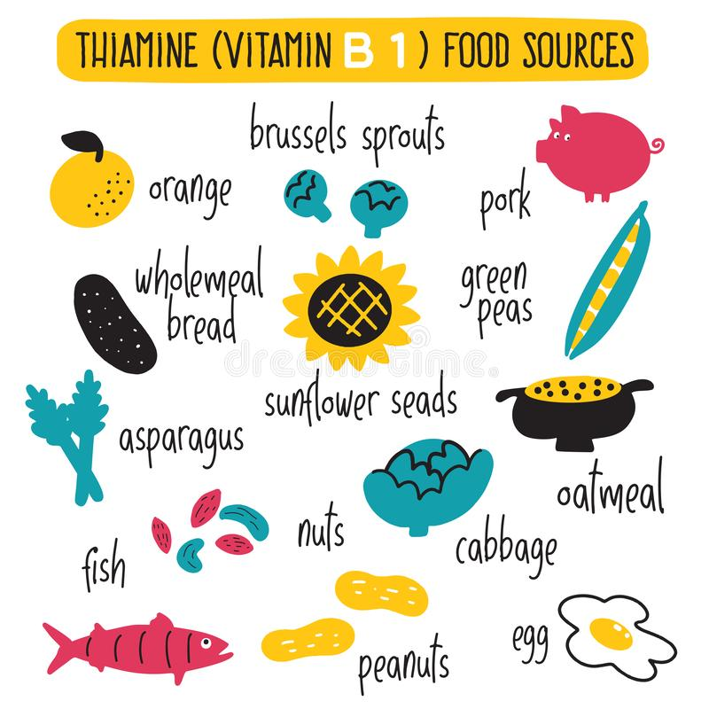 Free Vitamin B 1 Food Sources, Thiamine. Vector Cartoon Illustration. Royalty Free Stock Image - 144521226