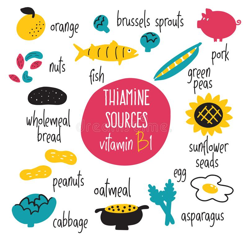 Free Vitamin B 1 Food Sources, Thiamine. Vector Cartoon Illustration. Health Eating Concept. Royalty Free Stock Photo - 144520735