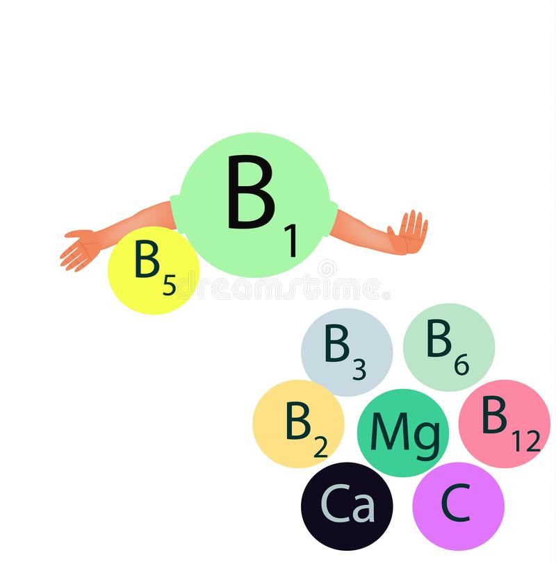 Vitamin b1 compatibility with other vitamins and minerals. Infographics. Vector illustration on isolated background. Vitamin B1 compatibility with other stock illustration