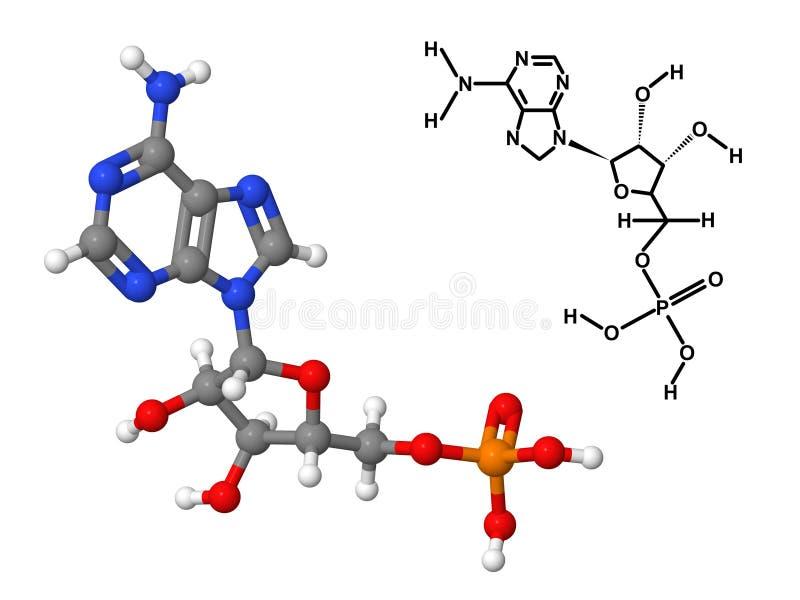 Download Vitamin B8 Molecule With Chemical Formula Stock Illustration - Image: 36466188