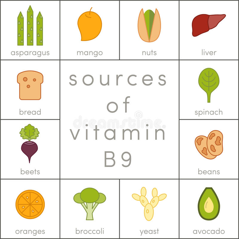 Vitamin B9. Sources of vitamin B9, food icons for infographic vector illustration