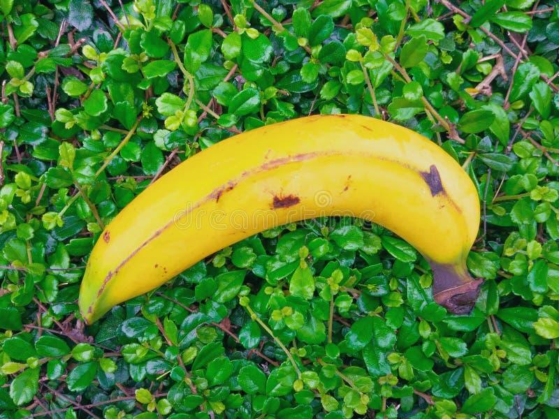 Vitamina do fruto da banana fotografia de stock