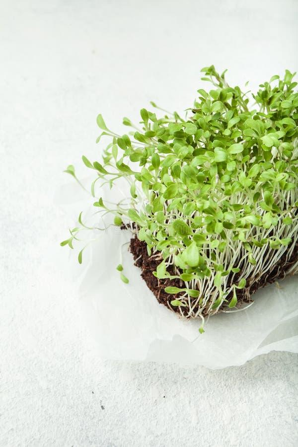 Vitaminbündel neue Mikrogrüns, Gemüsediät stockfotografie