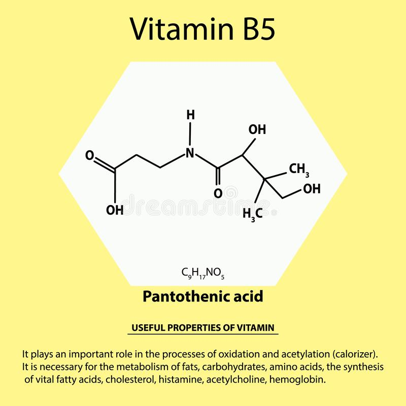 Vitamine B5 Formule chimique moléculaire acide pantothénique Propriétés utiles de vitamine Infographie Illustration de vecteur illustration stock