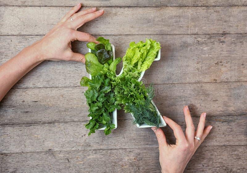 Vitamine K in voedselconcept De handen die van de vrouw plaat in de vorm van de brief K met verschillende verse blad groene groen stock afbeeldingen
