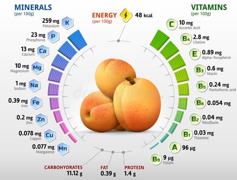 Vitaminen en mineralen van abrikozenfruit vector illustratie
