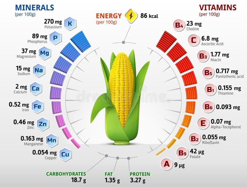 Vitaminer och mineraler av havremajskolven royaltyfri illustrationer