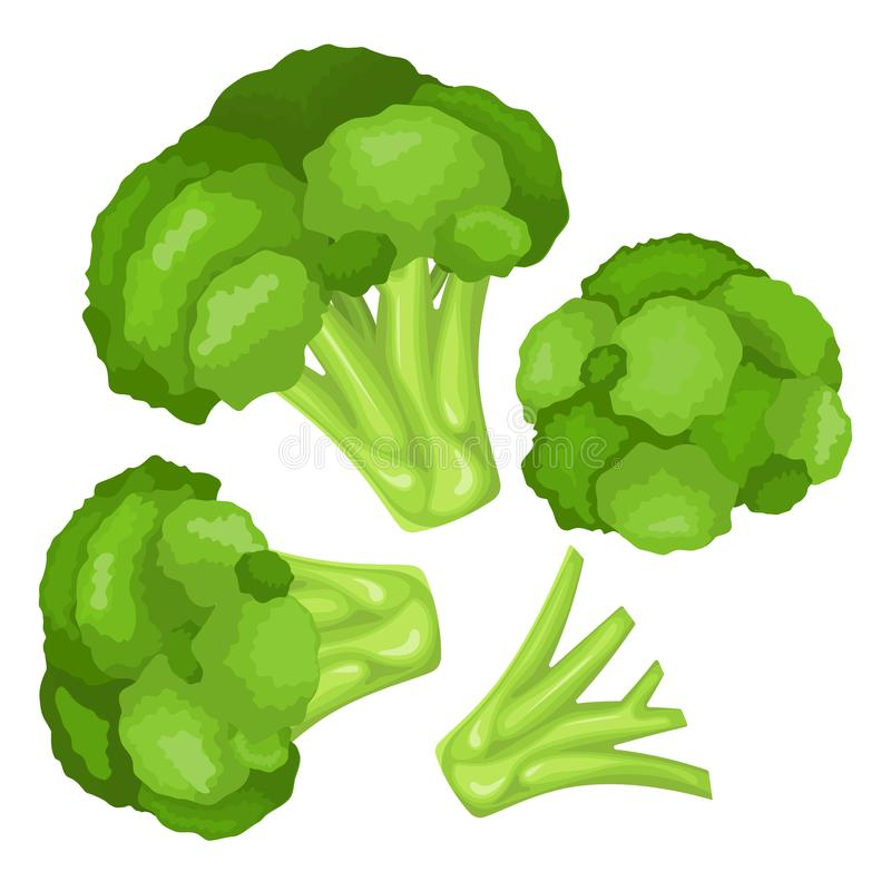 Vitamins and minerals of broccoli flower head. Infographics about nutrients in broccoli cabbage. Vitamins and minerals head of a flower of broccoli. High vector illustration
