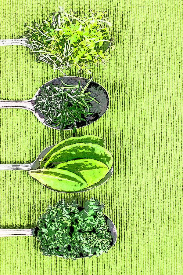 Vitamins - various herbs on spoons. Lie on light green cloth, with copy space and photo filter stock illustration