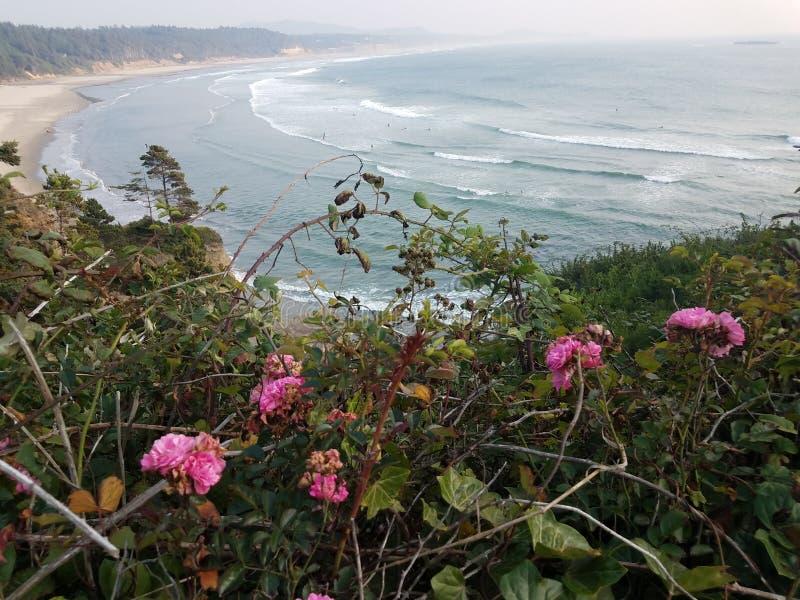 Vite con i fiori e l'oceano rosa e spiaggia a Newport Oregon fotografie stock libere da diritti