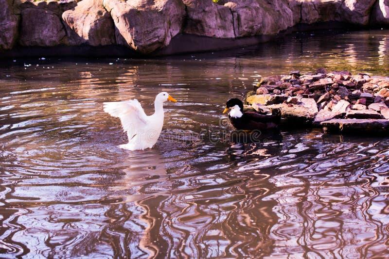 Vite degli uccelli fotografia stock libera da diritti
