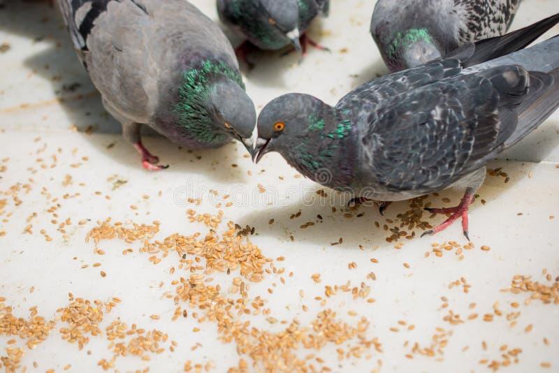 Vite degli uccelli fotografia stock