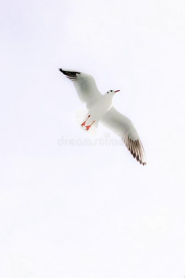 Vite sole dell'uccello fotografie stock libere da diritti