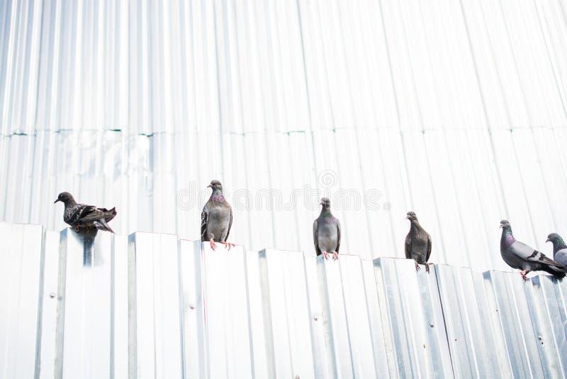 Vite sole dell'uccello nell'ambiente naturale fotografie stock libere da diritti