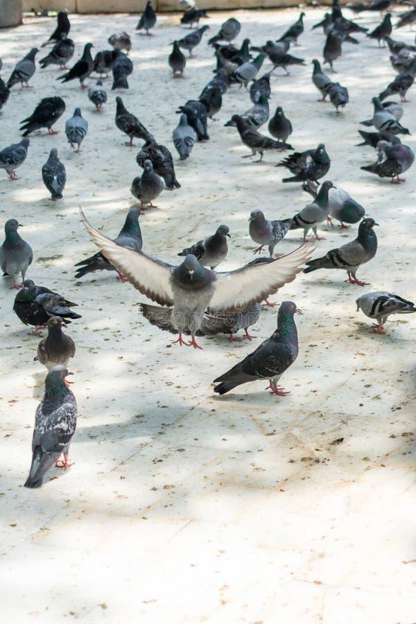 Vite sole dell'uccello nell'area urbana immagine stock