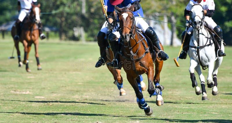 Vitesse de cheval dans le polo photos libres de droits