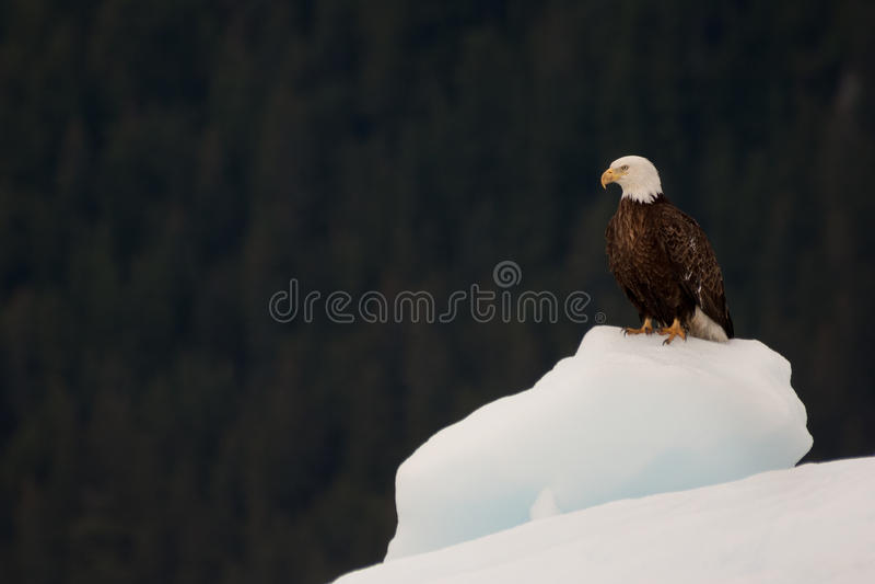 Vitesse normale d'Alaska photos libres de droits