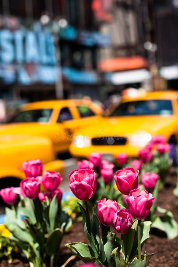 Vitesses jaunes de cabine par le Times Square à New York. photos libres de droits