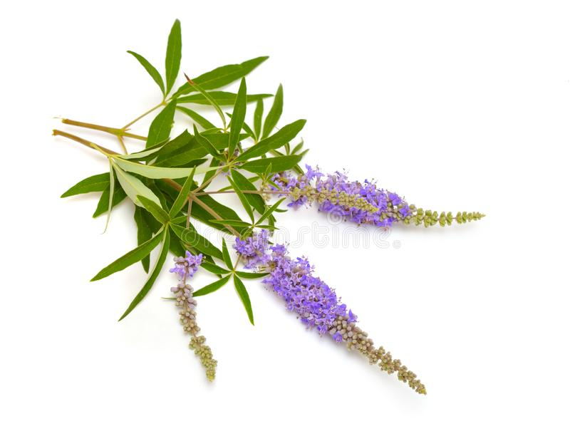 Image result for free vitex berries images