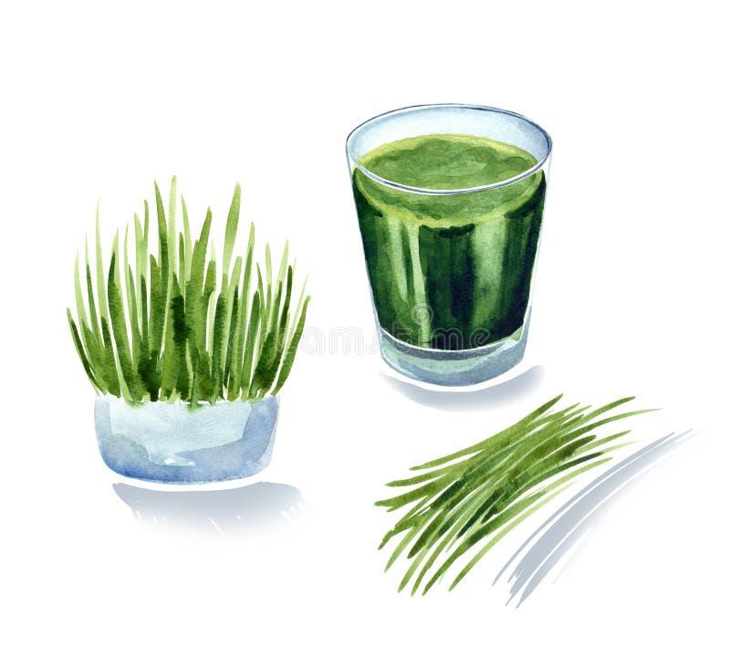 Vitgrass oder wheatgrass, Weizen keimt Saft, grünes coctail stock abbildung