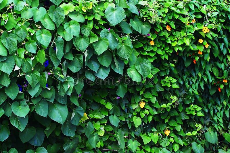 Download Viti fotografia stock. Immagine di paesaggio, piante, yellow - 7314762