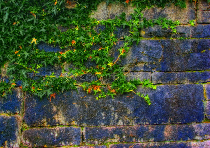 Viti verdi lungo la parete di pietra fotografia stock