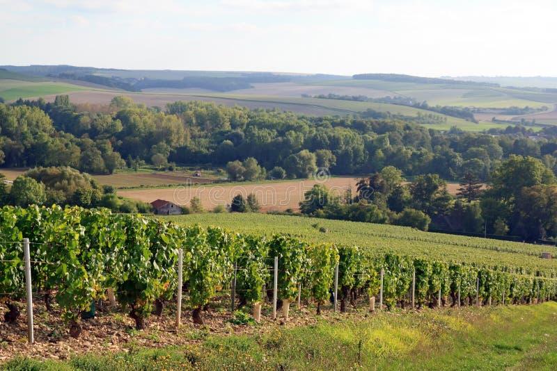Viti vicino ad Auxerre Borgogna Francia immagini stock libere da diritti