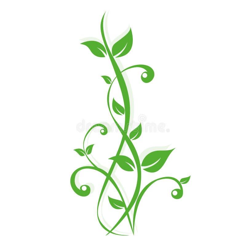 Viticcio delle piante verdi su fondo bianco royalty illustrazione gratis